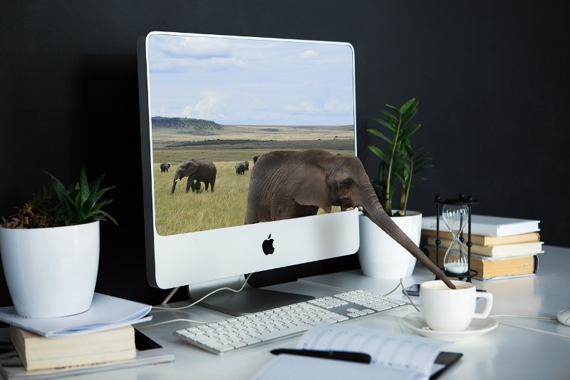 Ghostwriting_elephant-on-pc-screen-drinking-coffee-carimostert.com