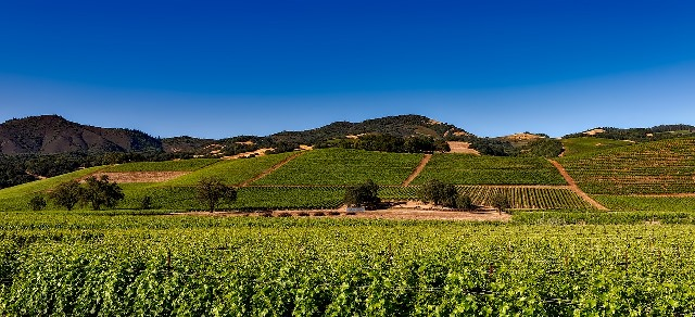vineyards-California-wine-country-carimostert.com