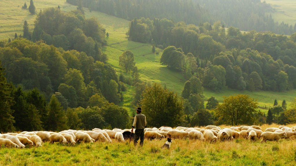 Shepherd-with-sheep-in-wooded-medow-carimostert.com